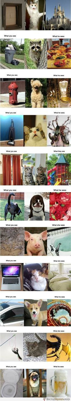 What animals see.....
