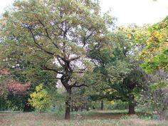 Košice - Park 1