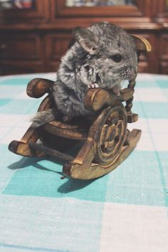 Adorable baby chinchilla in a rocking chair by Elesar_Severnyi on 500px.