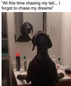Top 34 Funny Animal Memes Of The Day Funny Animal Memes, Dog Memes, Funny Animal Pictures, Cute Funny Animals, Dog Pictures, Funny Memes, Hilarious Pictures, Funny Vid, Animal Pics
