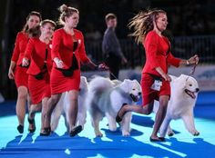 Outrage as World Dog Show is set to be held in China despite 'ghastly' meat trade revelations