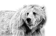 Another graphite bear added to my collection of animal drawings!
