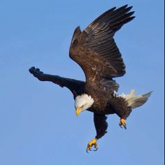 But those who wait on the Lord Shall renew their strength; They shall mount up with wings like eagles, They shall run and not be weary, They shall walk and not faint. (Isaiah 40:31 NKJV)