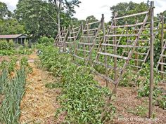 """Vegetables to Trellis - Save Space and Grow More: Vegetables to Grow """"Up"""" and How to Support Them"""