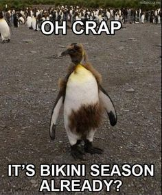 Check out: Animal Memes - Oh crap! One of our funny daily memes selection. We add new funny memes everyday! Bookmark us today and enjoy some slapstick entertainment! Lol, Haha Funny, Funny Cute, Funny Stuff, Funny Shit, Funny Things, That's Hilarious, Happy Things, Hilarious Sayings