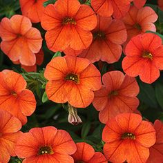 Orange is a one of my favorite colors in the garden. Every year I search for brilliant orange flowers to add to perennial beds, as annual . Window Box Flowers, Flower Boxes, Window Boxes, Flower Ideas, Tree Photography, Autumn Photography, Landscape Photography, Unique Gardens, Beautiful Gardens