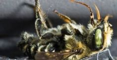 Report: Honeybee Death Rate is Currently too High for Survival of the Species