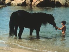 The Black Stallion- one of my all time favorite movies.   (Directed by Carroll Ballard. Produced by Francis Ford Coppola. Shot by Caleb Deschanel. And music by Carmine Coppola.)