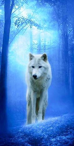 White Wolf in Blue Forest.