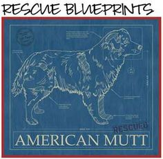 Animal blueprint company staffordshire bull terrier dog print animal blueprint company staffordshire bull terrier dog print dog blueprints pinterest staffordshire bull terriers bull terrier dog and terrier dogs malvernweather Images