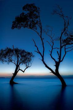 ✯ Dancing Mangroves