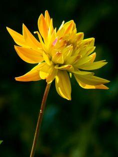 flower65 by redbeard31