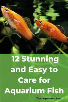Small Fish Tanks, Tropical Fish Tanks, Aquarium Ideas, Aquarium Fish, Fish Tank Cleaning, Water Play, Exotic Fish, Freshwater Fish, Terrariums