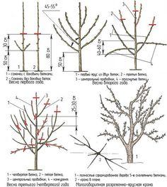 Bonsai Pruning, Pruning Fruit Trees, Tree Pruning, Bonsai Garden, Summer House Garden, Garden Posts, Plant Diseases, Vegetable Garden Design, Garden Trellis