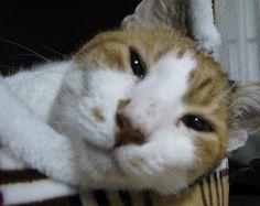 だからぁ! 何度も言うけどぉ! 父ちゃんなんかマジでいらないって! - http://iyaiyahajimeru.jp/cat/archives/65823