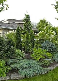 Privacy Fence Landscaping, Small Front Yard Landscaping, Landscaping Trees, Backyard Fences, Outdoor Landscaping, Outdoor Gardens, Backyard Privacy, Landscaping Design, Inexpensive Landscaping
