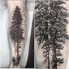 @damasktattoo #tattoo #tattoos #tattooed #tattooer #tattooist #tattooartist #seattleart #seattleartist #seattletattoo #seattletattooartist #workinghard #drawing #art #artist #illustration #california #nature #blxckink #blackwork #blackworkers #blacktattoo #blacktattooart #btattooing #womantattooer #femaletattooer #pct #westcoast #landscape #redwood #qttr #btattooing