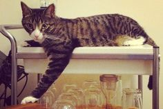 36 Things You Might Not Know About Cats | Mental Floss