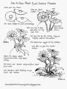 How To Draw Black Eyed Susan Flowers, Free Worksheet - How to Draw Worksheets for Young Artist