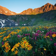 Image result for colorado wildflowers drawings