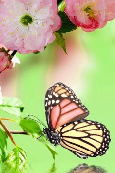 Springtime Butterfly Mobile Wallpaper