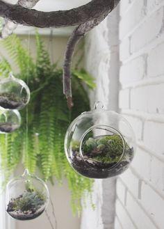 "Bathroom - Hanging plants in ""bubbles""."
