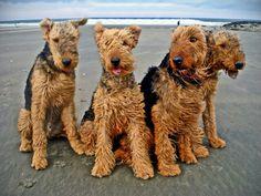 Airedale Beach!