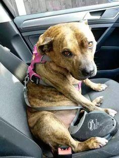 """Cette chienne a passé plus de 6 ans dans un refuge avant de trouver une famille grâce à un film. Lorsque vous visitez un refuge animalier, il est très dur de voir tous ces pauvres animaux qui attendent toujours un foyer. Freya était connue comme étant """"la chienne la plus solitaire du Royaume-Uni"""", car elle avait raté plus de 18 720 adoptions pendant les 6 ans qu'elle avait passé au refuge. Freya avait été prise en charge par le """"Freshfields Animal Rescue"""" à Liverpool alors qu'elle n'était…"""