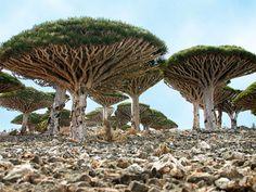 www.potzwonen.nl        Socotra, Jemen