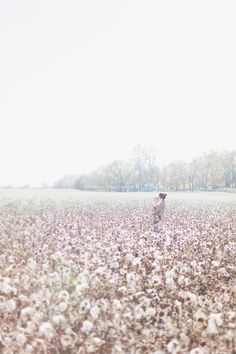 nashville cotton field family photography sam davis home8 Cotton Field Photography, Object Photography, Family Photography, Photography Ideas, Wedding Photography, River Pictures, Cotton Pictures, Cotton Fields, Crafts With Pictures