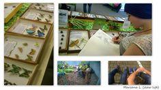 wystawa insektów, pająków i innych owadów
