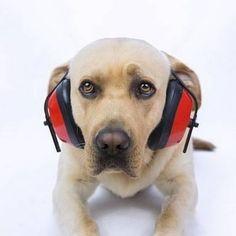 CREAN UN FÁRMACO PARA QUE LOS PERROS NO PASEN MIEDO CON LOS FUEGOS ARTIFICIALES.  El equipo liderado por la Universidad de Pensilvania (EE UU) ofrece ahora un tratamiento médico como solución a los temblores y gimoteos de sus perros para aliviar el nerviosismo y el estrés ante estos ruidos que tantas consultas veterinarias generan. La exposición regular a estímulos que inducen ansiedad a lo largo de un periodo de tiempo puede afectar negativamente a la salud física mental y social del perro…
