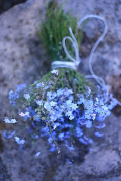 Forget-me-not | Madame Love