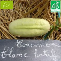 Concombre Blanc Hâtif Bio Honeydew, Fruit, Bio, Pickles, Cucumber, Seeds, Plants, White People, Honeydew Melon