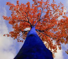 konstantin dimopoulos paints 'blue trees' to help cities go green