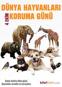 """4 Ekim """"Dünya Hayvanları Koruma Günü"""" Sevimli dostlarımızı koruyalım, hayat onlarla güzel."""