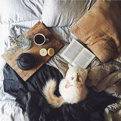 Breakfast in bed is a Sunday must (with a furry friend to keep you company).