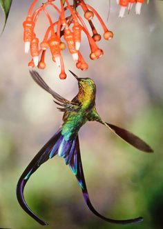 Beautiful little Hummer...