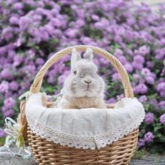French Country Home Animals And Pets, Baby Animals, Funny Animals, Cute Animals, Cute Bunny Pictures, Animal Pictures, Hamsters, Fluffy Bunny, White Rabbits