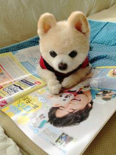 #wanko #wanko 秘密のお話し。佐野岳お兄さんは仮面ライダーなんだよʕ*̫͡*ʔ( 月刊テレビジョン)