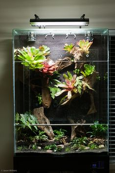 Vic's Display Paludarium - Page 3