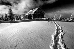 gray winter whispers .. X ღɱɧღ ||