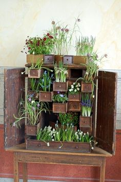vintage cabinet planter by jami - I LOVE this idea ... though I imagine unless they lined the drawers, it won't last very long
