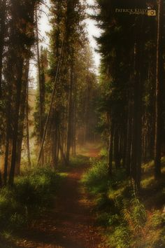 Photograph path by Patrick Kelly on 500px