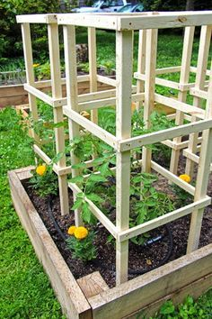 Tomato Plants Some Like A Project: Wooden Tomato Cages Tomato Cage Diy, Tomato Planter, Tomato Trellis, Tomato Cages, Garden Trellis, Garden Bed, Easy Garden, Growing Tomatoes In Containers, Growing Vegetables