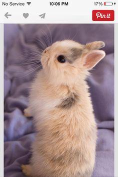 Bunny it's soooooo cute