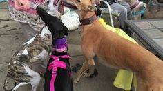 Galgo Visitors(so much light)