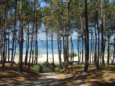 Pin maritime : l'huile de graines de pin maritime Océopin est l'huile visage surdouée qui repulpe, nourrit et apaise toutes les peaux ! www.oceopin.com/shop