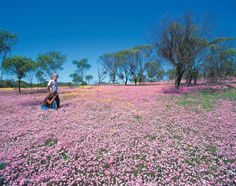 View the world's largest collection of wildflowers in Western Australia, with dazzling displays across the State, from Karijini National Park to Kings Park and beyond.