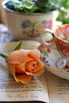 Cup of tea and a lovely rose